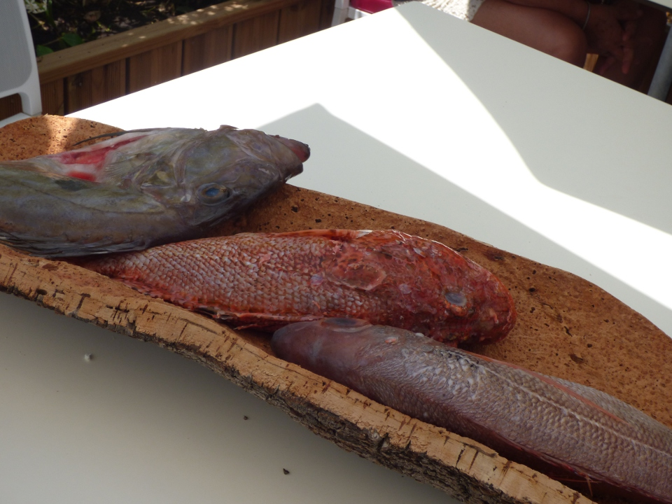 poisson_jour