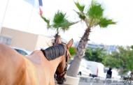 Jumping International de Cannes : L'édition 2016
