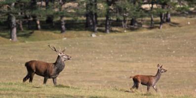 safari animalier cote dazur
