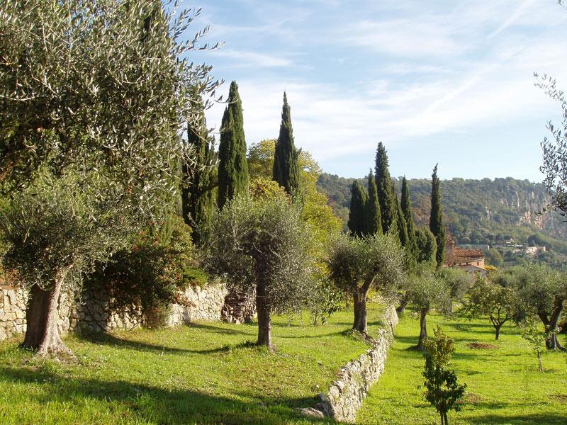 oliveraie_0