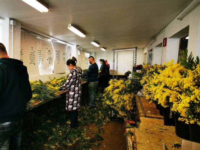 atelier-riviera-mimosa-pegomas