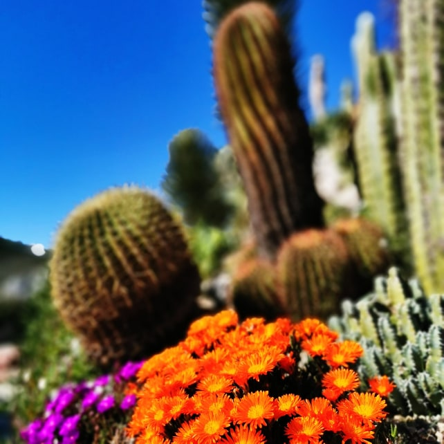 cactus-jardin-exotique-eze