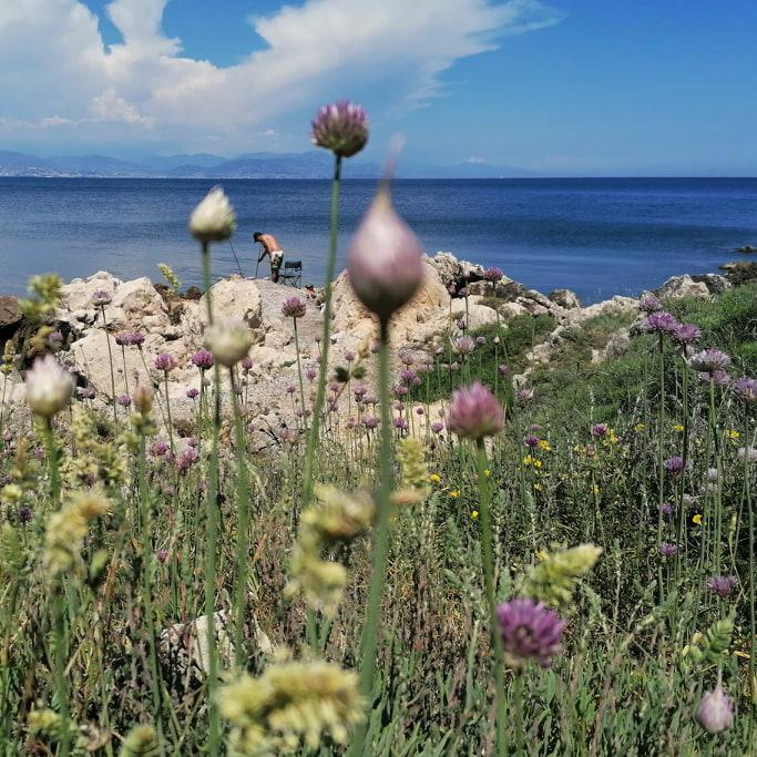 flore-cap-antibes