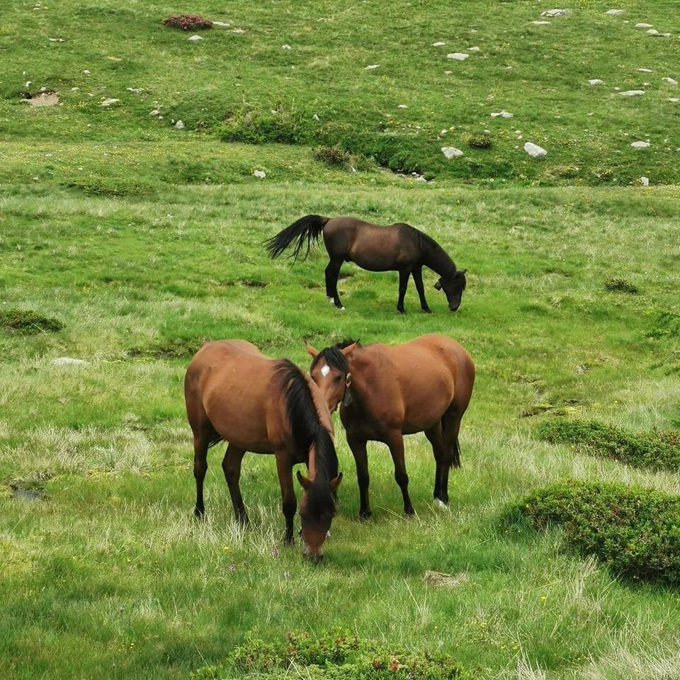 chevaux-vesubie