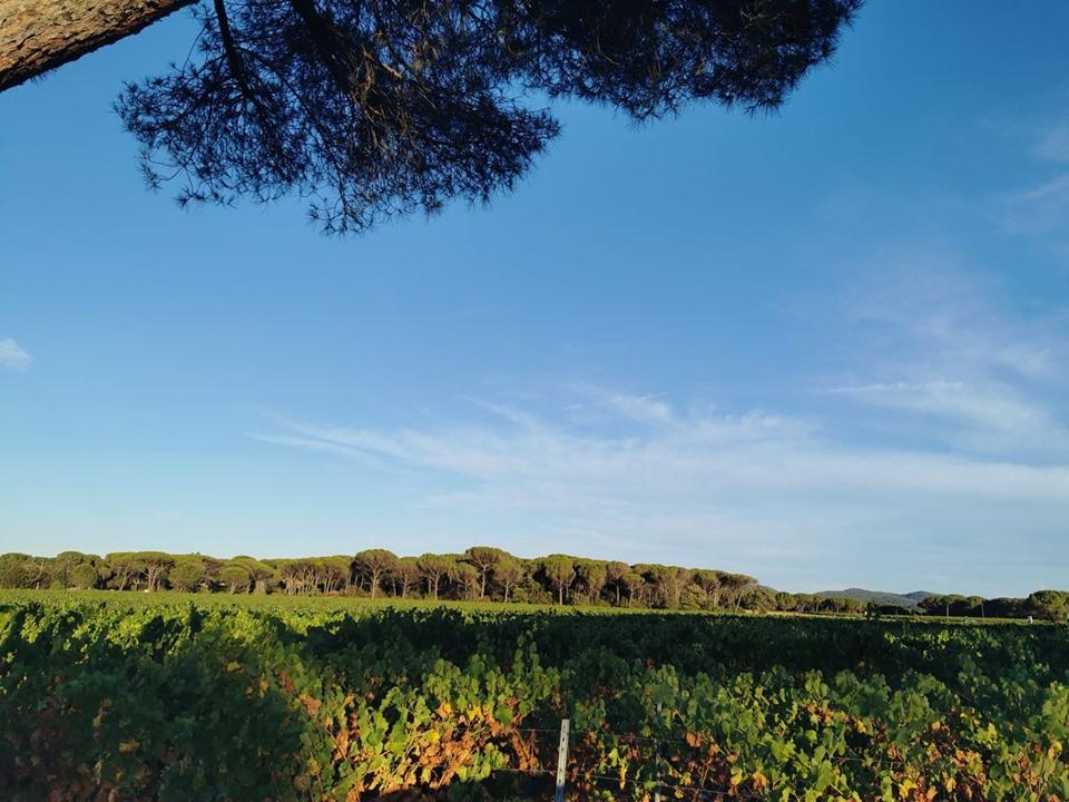 vignes-soir