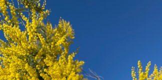 ikibouddha-jaune