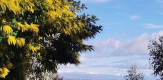 randonnee-mimosa-tanneron