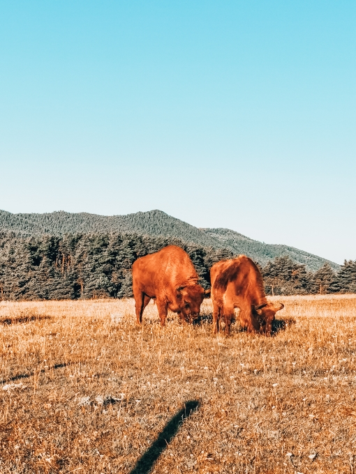 bison-monts-azur