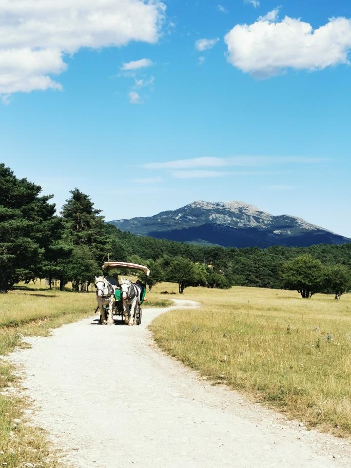 safari-caleche-reserve-monts-azur